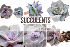 Succulent Plants Isolated Photo Bundle Product Image 2