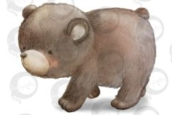 Baby Woodland   5 animal illustrations   PNG/JPEG clip art Product Image 5