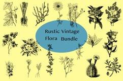 Vector Vintage Flora Illustrations Product Image 1