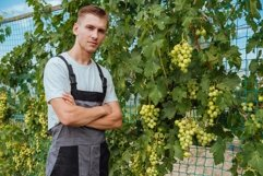Young man is checking the growing grapes before harvesting Product Image 1
