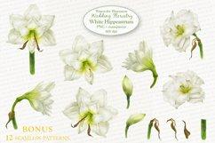 White Hippeastrum. Base Elements for Wedding Floristry. Product Image 2