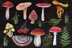 Mushrooms set Product Image 3
