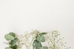 Frame made of green Eucalyptus populus leaves and gypsophila Product Image 1