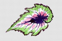 Nautilus-leaf begonia Watercolor png Product Image 2