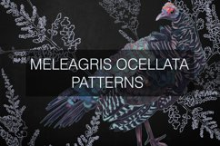 Meleagris ocellata patterns Product Image 1