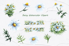 Daisy Watercolor Clipart Product Image 4