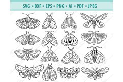 Moth svg file, Celestial moth Svg, Insect Svg, Png, Eps, Dxf Product Image 1