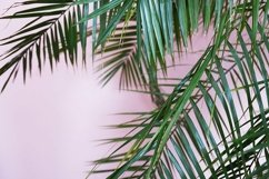 palm green leaves on pink, tropical background Product Image 1