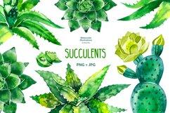 Watercolor succulents set Product Image 1