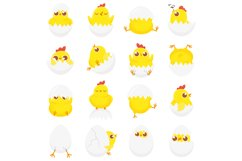 Cute chicken in egg. Easter baby chick, newborn chickens in Product Image 1
