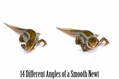 Smooth Newt 14 Photographs in Different Angles JPG Product Image 2