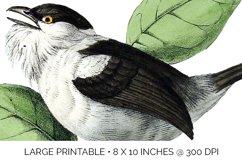 Birds Bundle Vintage Clipart Set Product Image 5