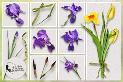 """Kit """"Colours of spring"""" by NatalinkaV design Product Image 2"""