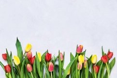 Border of red and yellow tulips on light background. Product Image 1