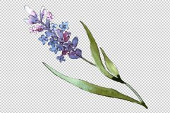Bouquet of idyll lavender Watercolor png Product Image 5