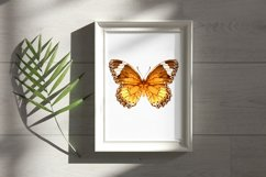 34 Hand-Painted Watercolor Butterflies Product Image 3