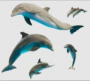 Set of jumping dolphins and sea Product Image 3