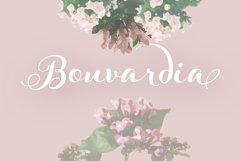 Bouvardia Product Image 1