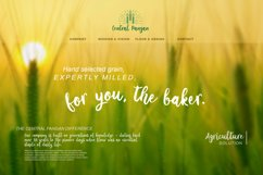 Let's Go Green | Natural Hand Brush Product Image 2