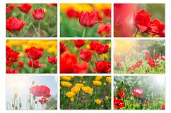 Spring flowers. Styled stock photo set. Product Image 2