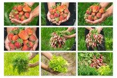 Harvest. Stock photo set. Product Image 2