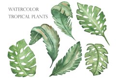 Watercolor tropical green leaves set and pattern Product Image 1