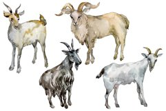 Agriculture goat Watercolor png Product Image 5