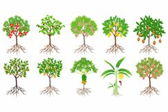 Set of exotic trees with fruits on a white background. Product Image 1