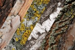 Set of forest backdrops - tree bark backgrounds Vol4 Product Image 2