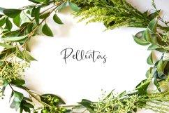 Pellintas Product Image 1