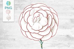 Carnation Clipart Flower Product Image 1