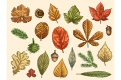 Hand drawn autumn leaves. Color falling forest foliage, octo Product Image 1