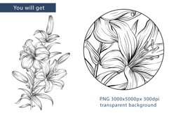 Flowers sublimation, hand drawn lillies PNG Product Image 2