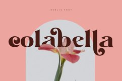 Denlia - Modern Serif Product Image 4