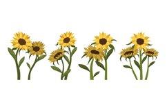 Sunflower Illustrations Product Image 1