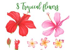Tropical leaves and flowers clipart Product Image 3