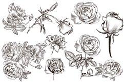 Royal garden, vector clipart set Product Image 2