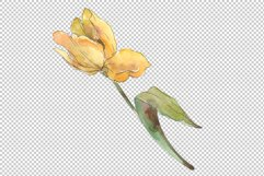 Assorted tulip bouquet Watercolor png Product Image 2