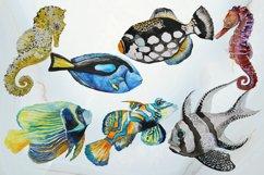 Tropical Sea Life Watercolor Clip Art Product Image 2
