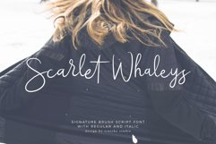 Scarlet Whaleys Script Product Image 1