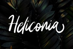 Heliconia Product Image 1