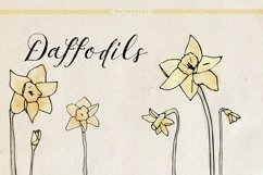 Watercolor Daffodils Product Image 1