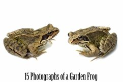 Common Garden Frog 15 Photographs in Different Angles JPG Product Image 5