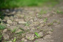 Green grass makes its way through the stones on a rural road Product Image 1