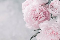 Pink Peonies Collection Product Image 3