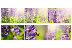 Lupine. Styled stock photo set. Product Image 3
