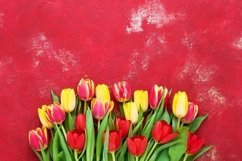 Bouquet of colorful tulips on bright red background. Product Image 1