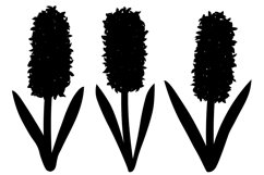 Hyacinths silhouettes. Flowers silhouettes. Hyacinth SVG. Product Image 4