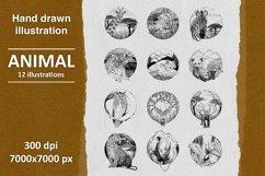 12 hand drawn animal illustrations Product Image 1