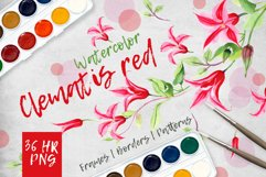 Clematis red PNG watercolor flower set  Product Image 1